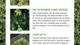 Taxus snoeiafval laten ophalen tegen kanker