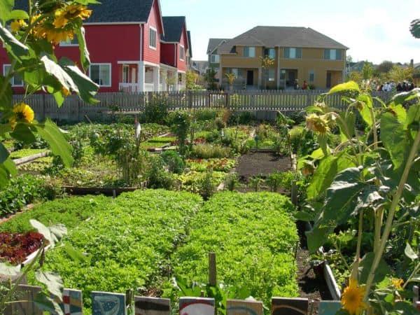 buurttuin samen tuinieren high point