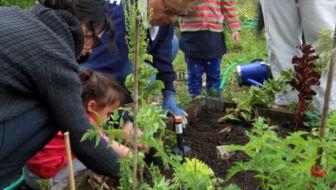 Welke rol spelen buurttuinen bij sociale cohesie?