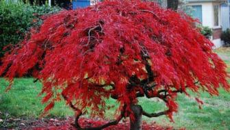 Een boom voor elke tuin, want bomen zijn cool!