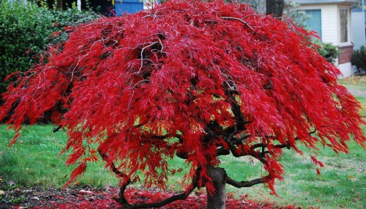 Bomen In Tuin : Een boom voor elke tuin want bomen zijn cool! tuin en balkon