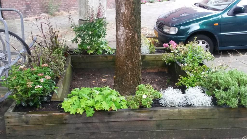 boomspiegel-plantenbak-straat
