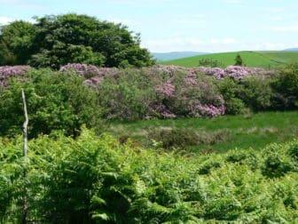 Beste standplaats voor rododendron