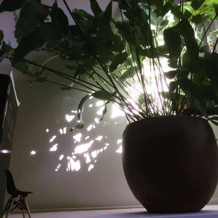 kamerplanten-in-de-winter