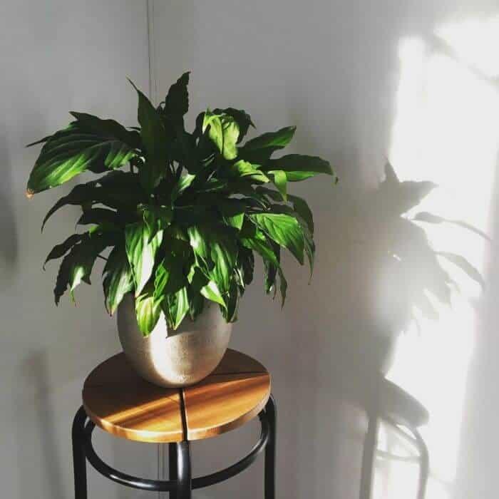 kamerplanten-overleven-winter