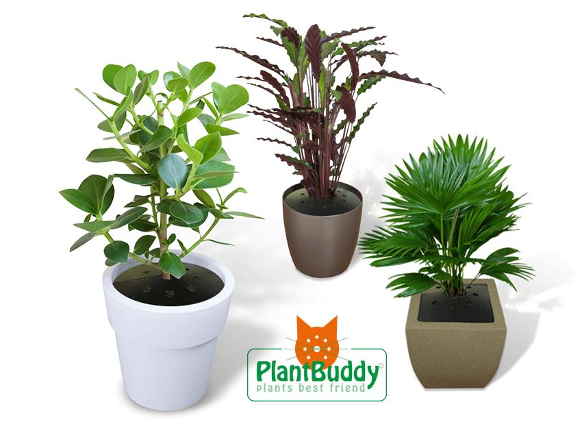 plantbuddy kamerplanten beschermen tegen gravende katten