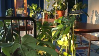 Monstera plant inspireert ontwerper voor bladvormige designlamp