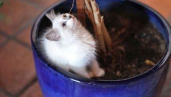 Zo hou je katten uit een bloempot of plantenbak