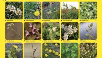 plantenjacht winterbloeiers plantenkaart