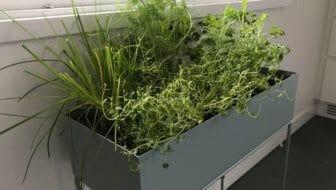 Indoor kruidentuintje in een mooie design plantenbak