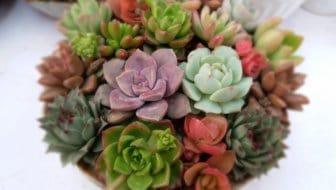 5 fouten die je maakt met je vetplantjes (en hoe je ze in leven houdt)