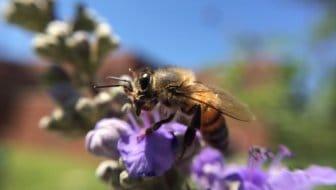 Bijenvoer voor je tuin