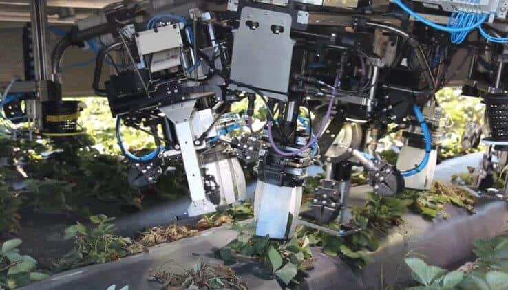 robot-aardbei-plukken