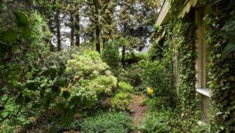 Tuinvraag: kan ik coniferen gebruiken als compost?