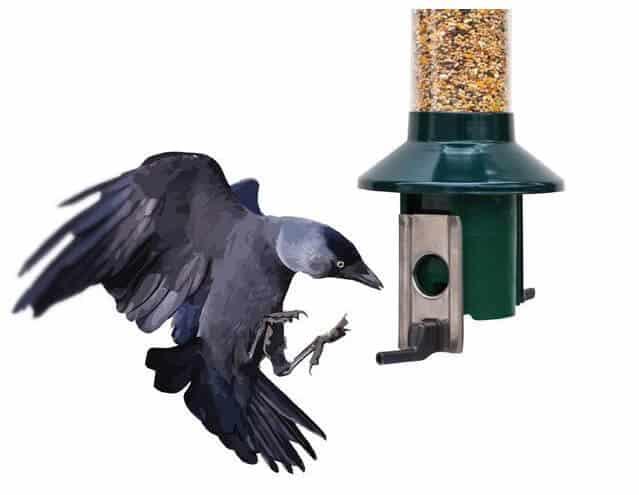kleine vogels voeren - deze voedersilo is de oplossing